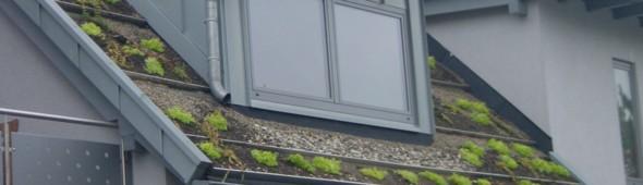 galabau ri e neuss schwimmteiche pools garten landschaftsbau dachbegr nung. Black Bedroom Furniture Sets. Home Design Ideas